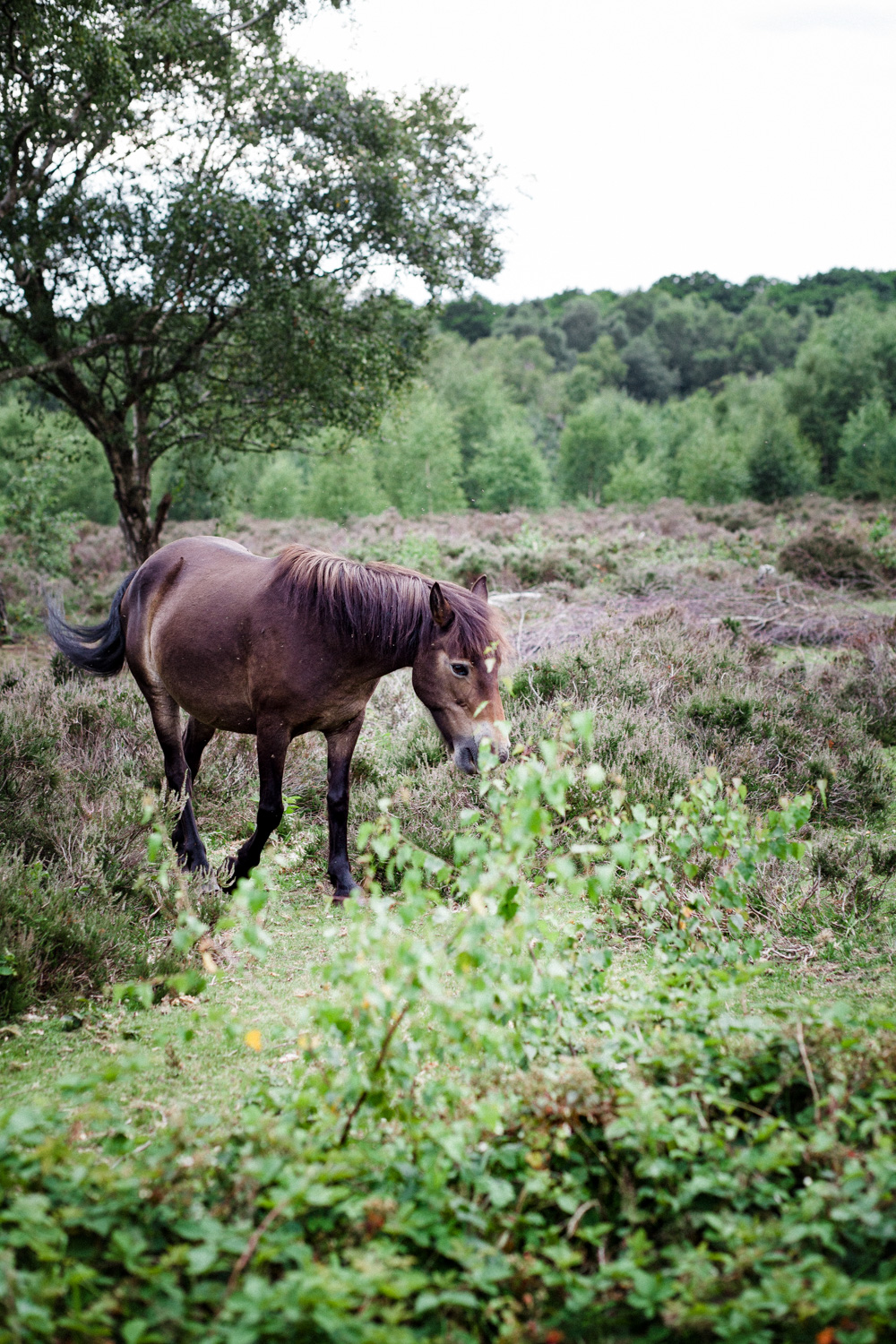 Sutton Park Horses | July 2020